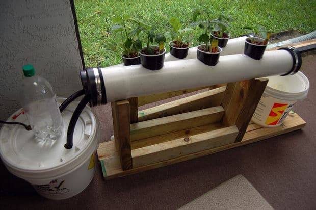 building a simple hydroponic system