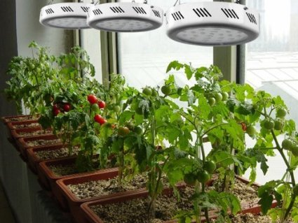 Review of the best hydroponic systems equipment for Indoor gardening machine