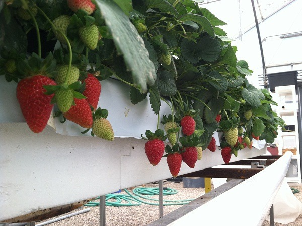 Surprising Results With Hydroponic Greenhouse Kits Catalog